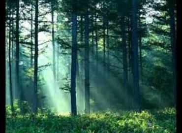 Fundamental Guiding Principles of Naturopathic Medicine
